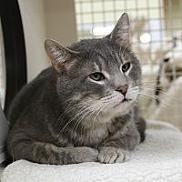 Adopt A Pet :: Gandorf - Rochester, MN