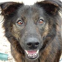 Adopt A Pet :: Bonnie - Long Beach, NY