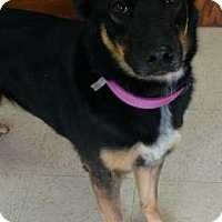 Australian Shepherd Mix Dog for adoption in Ashtabula, Ohio - Fiona