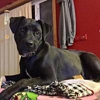 Adopt A Pet :: Baby - Brooklyn Center, MN