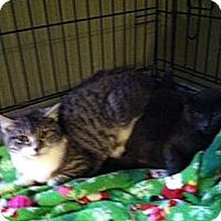 Adopt A Pet :: Feral kittens - Chesterfield, VA