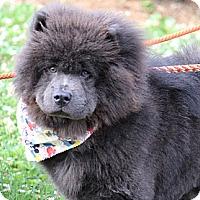 Adopt A Pet :: Dylan - Tucker, GA