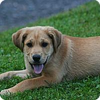 Adopt A Pet :: Sam - Morgantown, WV