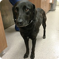 Adopt A Pet :: Molly H - Cumming, GA