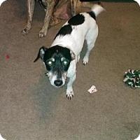 Adopt A Pet :: Mojo - Pasadena, MD