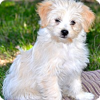 Adopt A Pet :: Sunny - Simi Valley, CA