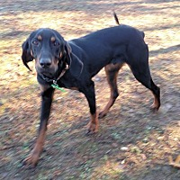 Adopt A Pet :: Bandana - Atlanta, GA