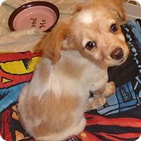 Adopt A Pet :: Praline - San Diego, CA