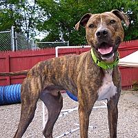 Adopt A Pet :: Carson - Carmel, NY