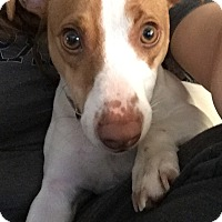 Adopt A Pet :: Camden - Blue Bell, PA