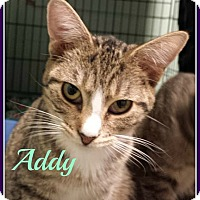 Adopt A Pet :: Addy - Gonic, NH