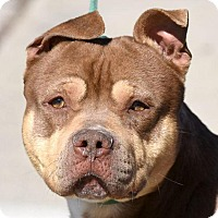 Adopt A Pet :: CURIOUS GEORGE - New Haven, CT