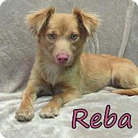 Adopt A Pet :: Reba - Georgetown, SC