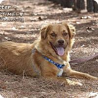 Adopt A Pet :: Ritter - Minneola, FL