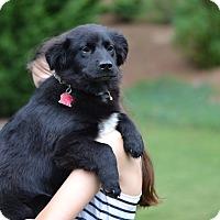 Adopt A Pet :: Rake - Garden Litter - Acworth, GA