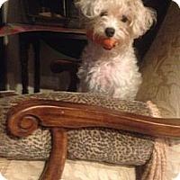 Adopt A Pet :: Baby - Miami, FL