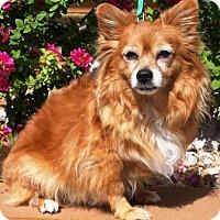 Adopt A Pet :: Franz - Gilbert, AZ