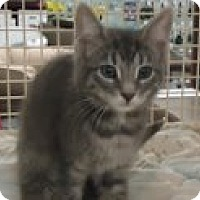 Adopt A Pet :: Misty - Riverside, RI