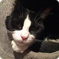 Adopt A Pet :: Shrek - Hamilton, ON