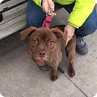 Adopt A Pet :: Mae - Berea, OH