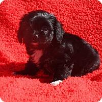 Adopt A Pet :: Freda - Henderson, NV