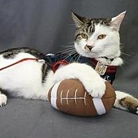 Adopt A Pet :: Possum - League City, TX