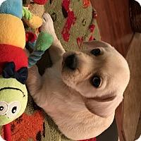 Adopt A Pet :: Hootie - Charlotte, NC