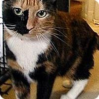 Adopt A Pet :: Hershey Kiss - Alexandria, VA