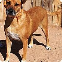 Adopt A Pet :: Girl - Gilbert, AZ