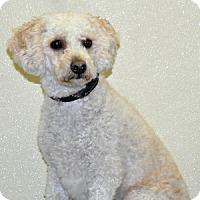 Adopt A Pet :: Ace - Port Washington, NY