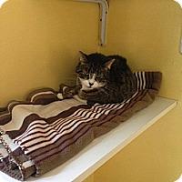 Adopt A Pet :: Baby - Lancaster, MA