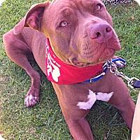 Adopt A Pet :: NAVEEN - Ojai, CA