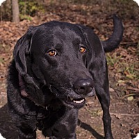 Adopt A Pet :: Herbie - Lewisville, IN