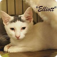 Adopt A Pet :: Elliot - Ocean City, NJ