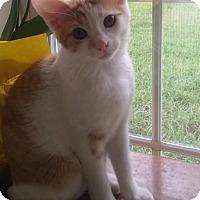 Adopt A Pet :: GYPSY - Madison, AL
