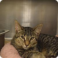 Adopt A Pet :: Georgie Girl - Washington, PA