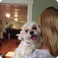 Adopt A Pet :: Jojo - North Hollywood, CA