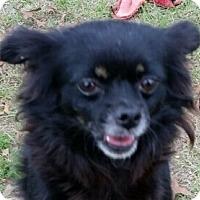 Adopt A Pet :: Polly - geneva, FL