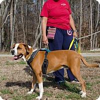 Adopt A Pet :: Albert - Midlothian, VA