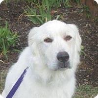 Adopt A Pet :: Meisha - LaGrange, KY