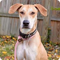Adopt A Pet :: Bonnie - Norwalk, CT
