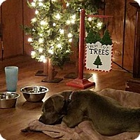 Adopt A Pet :: Pepper - Indianapolis, IN