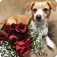 Adopt A Pet :: Abby - Pascagoula, MS