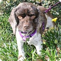 Adopt A Pet :: Dixie - Campbell, CA