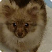 Adopt A Pet :: Lori Latte - San Diego, CA