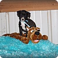 Adopt A Pet :: Leonard - Brattleboro, VT