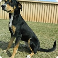 Labrador Retriever Mix Dog for adoption in Columbus, Nebraska - Sam
