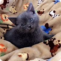 Adopt A Pet :: Goose - Anaheim Hills, CA