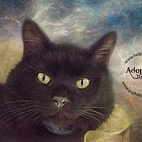 Adopt A Pet :: Meow - Belton, MO