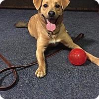 Adopt A Pet :: Colton - Garden City, MI